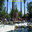 Bad Boys Pool Party 2005